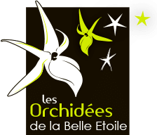 Orchidées de la belle étoile