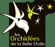 Orchidées de la belle étoile